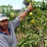 Agricultores alagoanos ainda podem renegociar a a dívida rural