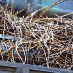 Usina Cooperativa vai manter a colheita da safra de cana-de-açúcar até 11 de abri