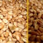Governo vai distribuir sementes de feijão e milho aos agricultores
