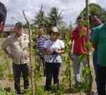 Agricultores da região do Agreste têm acesso a curso sobre o cultivo sustentável do inhame