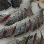Crescem as vendas de peixes com a proximidade da Semana Santa