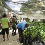 Agricultores viçosenses recebem mudas de frutas cítricas de limão e laranja