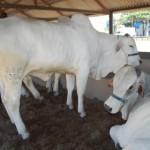 Animais do plantel Irmãos Barros Correia estarão à disposição dos compradores