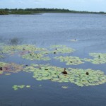 Área de Preservação de Marituba de Peixe