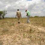 Agricultores contabilizam o prejuízo com a seca que atinge o Nordeste