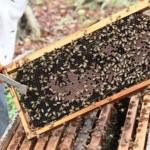 Apiário se destaca na produção de mel