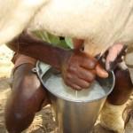 Torneio leiteiro estimula a produtividade nas fazendas