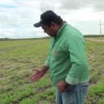 Técnico Adeilton Lourenço mostra os benefícios do adubo verde para o solo