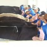 Estudantes participam de curso de inseminação artificial em bovinos