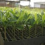 Plantio de mudas será feito por alunos da Escola Sesi Cambona e da Escola Núcleo do IPMA