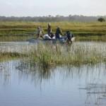 Técnicos e pescadores fazem repovoamento de Pacamã