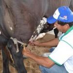 Leite fornecido para CPLA garante melhor remuneração e assistência técnica