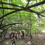 Cinturão Verde da Braskem, um espaço apropriado para debates acerca da sustentabilidade