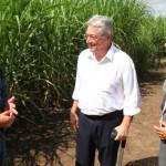 Governador Teotonio Vilela Filho e o diretor da GranBio Manoel Carnaúba Cortez conversam com o técnico sobre a nova variedade de cana-de-açúcar