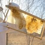 Produtor de mel