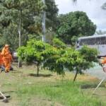 Novas árvores plantadas na BR 104