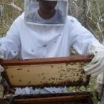 Kits distribuídos pela Codevasf ajudam a impulsionar a produção de mel