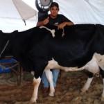 Festa do Leite reunirá pequenos produtores de leite