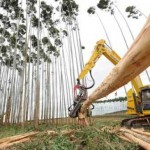 Indústria de Papel e Celulose investirá no plantio de eucalipto