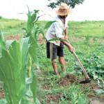 Agricultor terá abatimento dos juros e multas das dívidas