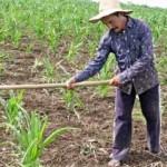 Agricultor trabalha no campo