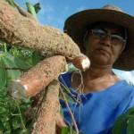 Agricultura familiar se expande no Nordeste