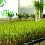 Granbio, indústria de última geração apostando em Alagoas