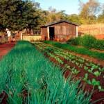 Produtos orgânicos estão sendo bastante procurados no mercado