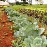 Horticultura também é aposta do Pronatec