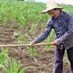 Produtores se dizem prejudicados com a legislação vigente que beneficia apenas municípios do semiárido