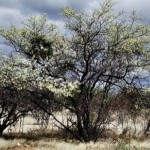 Sertão, uma terra de oportunidades e de flora e fauna bastante diversificada