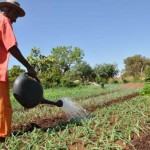 Microcrédito Orientado contempla pequenos agricultores familiares