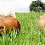 Programa Mais Pasto aumenta eficiência da fazenda