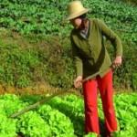 Jovens agricultores familiares serão beneficiados com as linhas de crédito do BNB