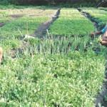 Agricultores assistidos pelo Agroamigo