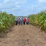 Agricultores conhecem plantio de milho na região de Arapiraca
