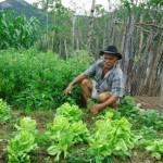 Aumenta o volume de recursos aplicados na agricultura familiar