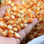 Estado quer fortalecer a produção de grãos