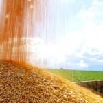 Produção de milho no cerrado piauiense