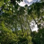 Cinturão Verde da Braskem sempre ajudando a sustentabilidade do meio ambiente
