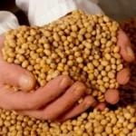 Serão testados materiais de milho e soja, com acompanhamento do plantio a colheita, que se destacam na área da pesquisa