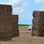 Palha da cana-de-açúcar utilizada para produção de etanol