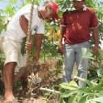 Trabalhar na terra dignifica o homem do campo