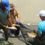 Agricultores pescam nos lagos, açudes e rios que receberam filhotes de peixes da Codevasf