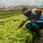 Práticas agroecológicas serão disseminadas junto aos pequenos produtores rurais