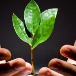 O meio ambiente cada vez mais faz parte do dia a dia do homem