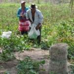 Pequenos produtores são beneficiados com empréstimos da Desenvolve