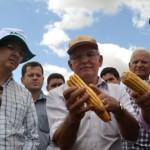 Produtores, secretários e pesquisadores observam as variedades de milho colhida no agreste