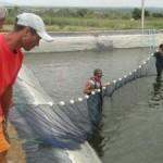 Tanques de dessalinização ajudam no criatório de peixes