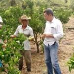Agricultores investem na produção de frutas livres de agrotóxico